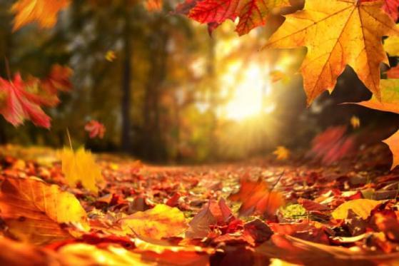 TUI-Aktie: Besserung im Herbst?